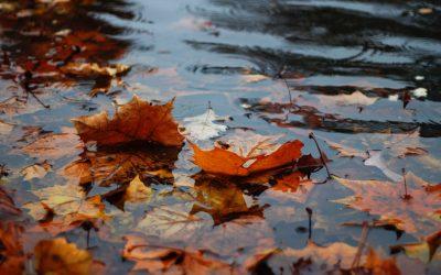 Novembre bagnato