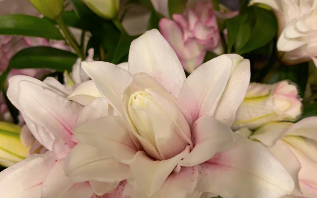 Federico Feriani e i suoi amati fiori